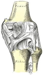 Posterior Inferior Tibiofibular Ligament Posterior Ligament Of The Head Of The Fibula Wikipedia