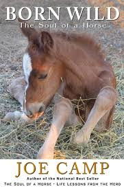 Hay In The Middle Of The Barn Song Why Are These Horses Eating Hay The Soul Of A Horse