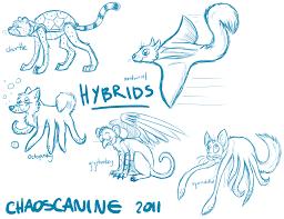 strange hybrid sketches by chaoscanine on deviantart