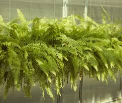 Plants Indoors by Bringing Your Plants Indoors And Outdoors Space For Life