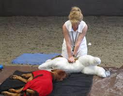 horsham west sussex canine first aid course rhodes 2 safety