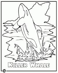 killer whale orca coloring page animals town animals color
