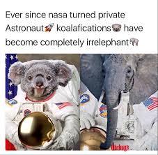 Koala Bear Meme - the best koala bear memes memedroid