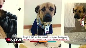 belgian sheepdog michigan michigan hospital says goodbye to beloved therapy dog diagnosed