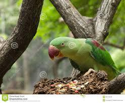 pretty bird eating royalty free stock image image 1664096