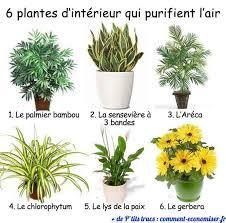 purifier l air d une chambre 6 plantes d intérieur qui purifient l air plants feng shui and