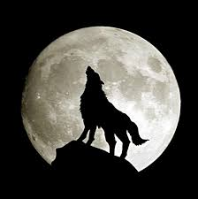wolf moon search wolf howl wolf moon