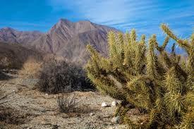 anza borrego desert anza borrego desert state park san diego county california wild