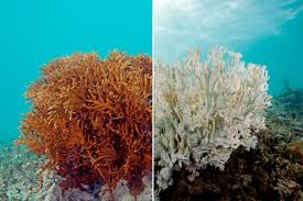 Map Of Coral Reefs Experts The Great Barrier Reef Cannot Be Saved Vox