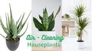 air cleaning houseplants that are almost impossible to kill youtube