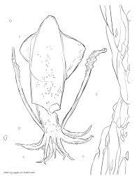 sea creatures coloring page sea animals list squid colouring pages