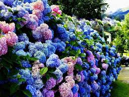 immagini di giardini fioriti giardiniere modena carpi manutenzione progettazione