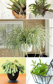 houseplants that need little light which house plants need little light