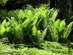 Free Picture Leaf Nature Fern Free Picture Green Detail Shadow Leaf Nature Flora Fern
