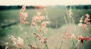 natur sprüche sonnenaufgang zitate sprüche und weisheiten weise wortwahl