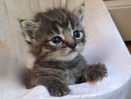 spay u0026 neuter programs angelcat haven feline rescue