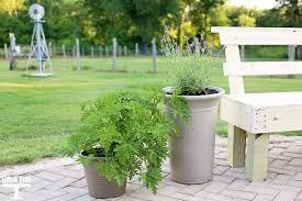 Define Backyard 5 Tips To Get Your Backyard Ready For Summer Grace And Good Eats