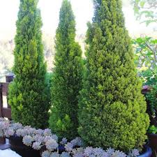 garden astounding evergreen landscaping ideas evergreen