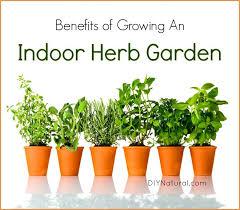 herbs indoors indoor herb garden 5 reasons you should be growing herbs indoors