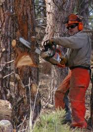 Safety Clothing Near Me Chainsaw Safety Clothing Wikipedia
