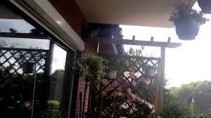 taubenabwehr balkon tauben bauen nest auf balkon