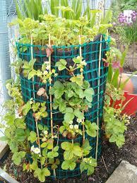 strawberry tower garden ideas pinterest strawberry tower