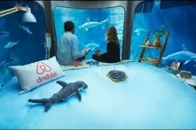 chambre aquarium insolite airbnb propose une chambre au milieu des requins à l