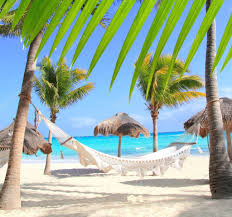 caribbean beach hammock and palm trees u2014 stock photo lunamarina