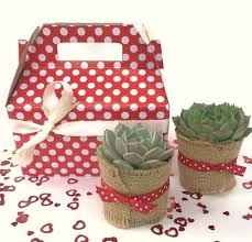 Gardener Gift Ideas Gift Box With Succulents Plants In A Box Succulent Gift