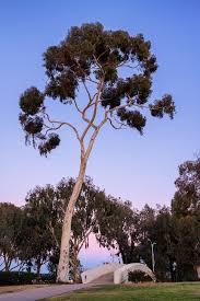 balboa park san diego mckinnell photography