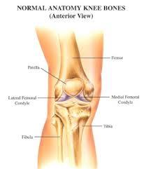 Knee Bony Anatomy Jordi Ballester