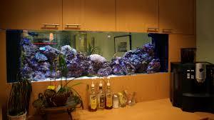modern home aquarium design home modern