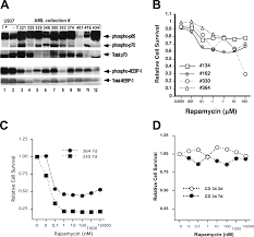 mtor regulates cell survival after etoposide treatment in primary