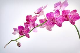 Orchid Flower Pic - types of flowers