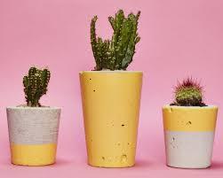 small yellow concrete planter cactus succulent u2013 hi cacti