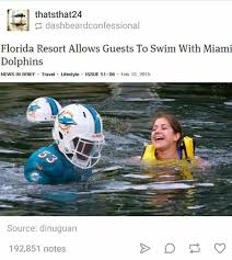 Miami Dolphins Memes - swimming with dolphins count me in meme guy