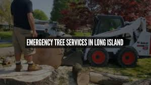 tree services island experts removal nassau county best deal