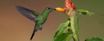 mammiferi volanti colibr祠 trochilidae scheda completa animali volanti