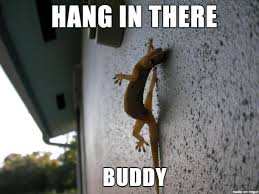 Hang In There Meme - hang in there gecko meme on imgur