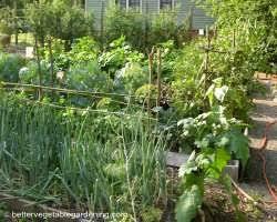 vegetable garden fertilizer for organic gardens