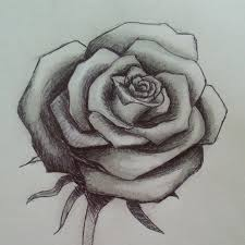 rose drawing sketch pencil on instagram