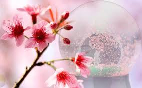 cit ticc cherry blossom globe a coin in a snow globe celebrates