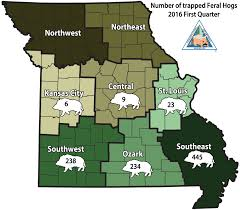 missouri map by population mdc reports busy winter trapping feral hogs missouri department
