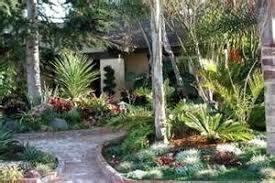 cheap landscaping ideas coconut trees florida landscape