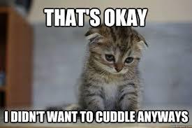 Funny Kitten Memes - 12 very sad kittens that never quite became a meme meme cuddling