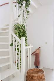 hanging plant in the stairwell for indoor plants and blooms