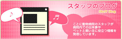 si鑒e タ genoux スタッフのブログ ことに動物病院 札幌市西区の動物病院 犬 猫