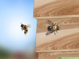 Bee Deterrent For Patio How To Get Rid Of Bees 15 Steps With Pictures Wikihow