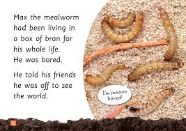 insect story book mealworm steve parish nature connect