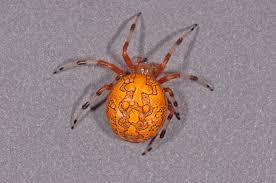 halloween spiders halloween spider spidersrule